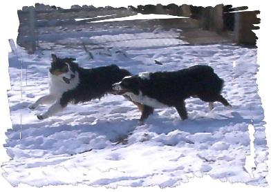 Lily & Tache enjoy the snow     A.Janiszak Photo